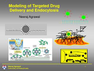 Modeling of Targeted Drug Delivery and Endocytosis
