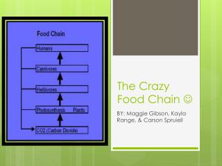 The Crazy Food Chain  