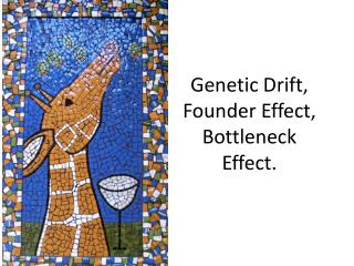 Genetic Drift, Founder Effect, Bottleneck Effect.