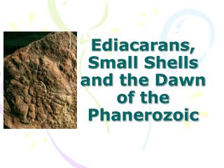 Ediacarans, Small Shells and the Dawn of the Phanerozoic