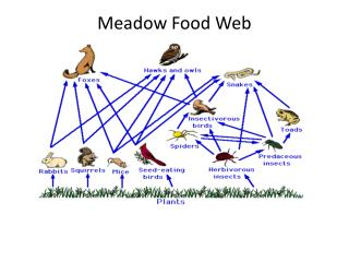 Meadow Food Web