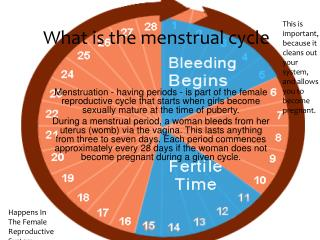 What is the menstrual cycle ?