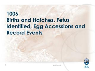 1006 Births and Hatches ,  Fetus Identified, Egg Accessions and Record Events
