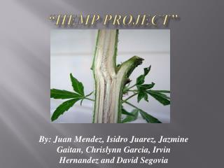 """""""Hemp Project"""""""