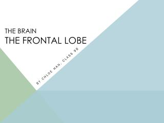 THE BRAIN The Frontal lobe