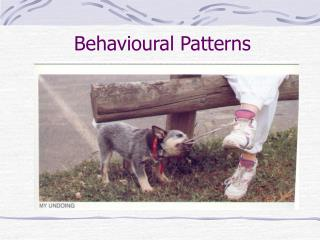 Behavioural Patterns