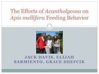 The Effects of  Acantholycosa  on  Apis mellifera  Feeding Behavior