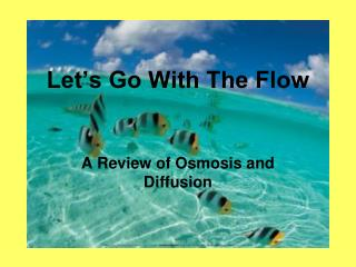 Let�s Go With The Flow