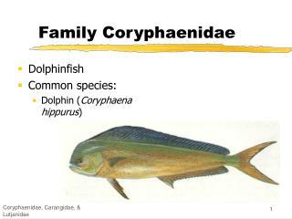 Family Coryphaenidae