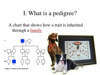 I. What is a pedigree?