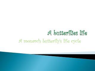 A butterflies life