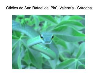 Ofidios de San Rafael del Pirú, Valencia - Córdoba