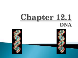 Chapter 12.1 DNA