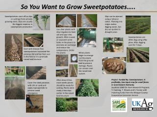 Cover the seed potatoes with dirt or sand and apply  napropamide  to prevent weed emergence