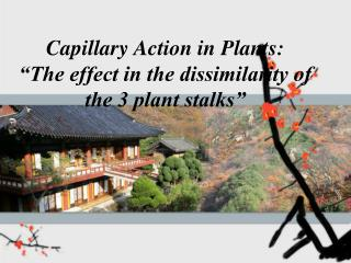 """Capillary Action in Plants: """"The effect in the dissimilarity of the 3 plant stalks"""""""