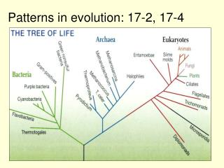 Patterns in evolution:  17-2, 17-4