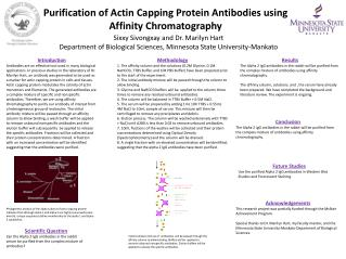Purification of Actin Capping Protein Antibodies using Affinity Chromatography