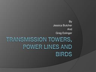 Transmission Towers, Power Lines and Birds