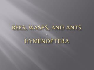 Bees, wasps, and ants - Hymenoptera