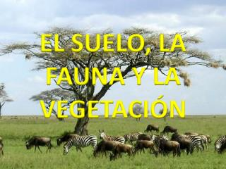 EL SUELO, LA FAUNA Y LA VEGETACIÓN