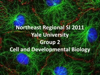 Northeast Regional SI 2011 Yale University Group 2  Cell and Developmental Biology