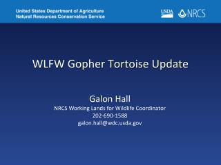 WLFW Gopher Tortoise Update