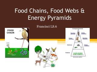 Food Chains, Food Webs & Energy Pyramids