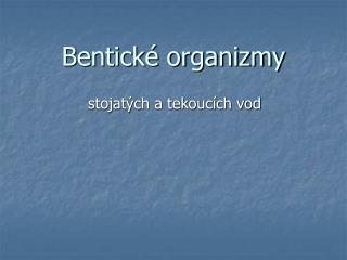 Bentick  organizmy
