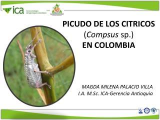 PICUDO DE LOS CITRICOS ( Compsus sp. )  EN COLOMBIA