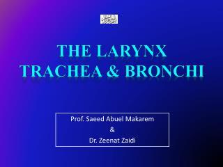 The Larynx Trachea & Bronchi
