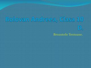 Bolovan Andreea, Clasa 10 D.