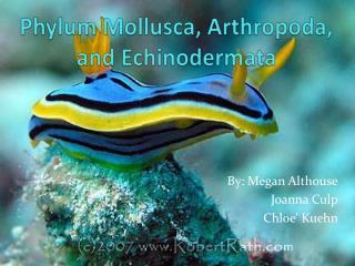 Phylum Mollusca,  Arthropoda , and  Echinodermata