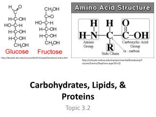 Carbohydrates, Lipids, & Proteins