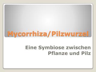 Mycorrhiza /Pilzwurzel