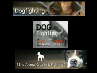 Dog Fighting needs to End!