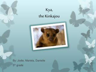 Kya , the Kinkajou