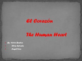 El  Corazón The Human Heart By:  Victor  Benlice         Elvis Estrada         Angel Vera