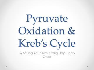 Pyruvate Oxidation &  Kreb's  Cycle
