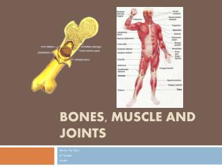 Bones, Muscle and Joints