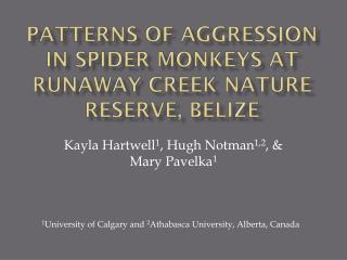 Patterns of aggression in spider monkeys at runaway creek nature reserve, Belize