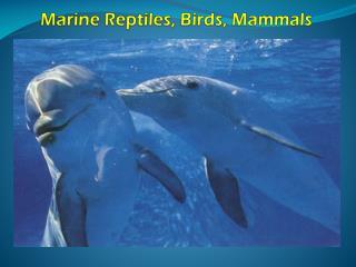 Marine Reptiles, Birds, Mammals