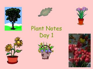 Plant Notes Day 1