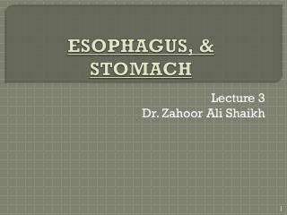 ESOPHAGUS, & STOMACH
