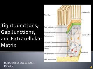 Tight Junctions, Gap Junctions, and Extracellular Matrix