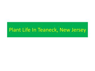 Plant Life In Teaneck, New Jersey