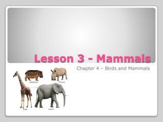 Lesson 3 - Mammals