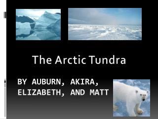 By Auburn, Akira, Elizabeth, and Matt