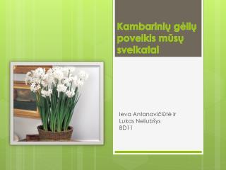 Kambarinių gėlių poveikis mūsų sveikatai