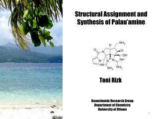 Structural Assignment and Synthesis of  Palau�amine