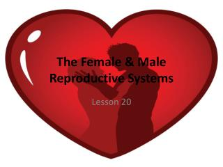The Female & Male Reproductive Systems